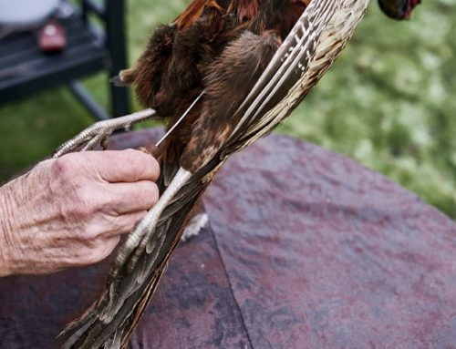 Istandgørelse af fuglevildt