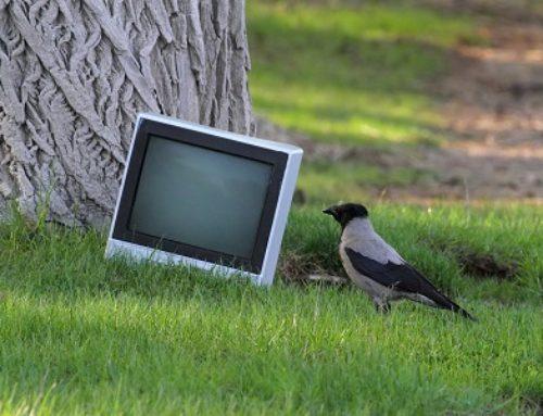 De kloge kragefugle: Kragen og agilitybanen