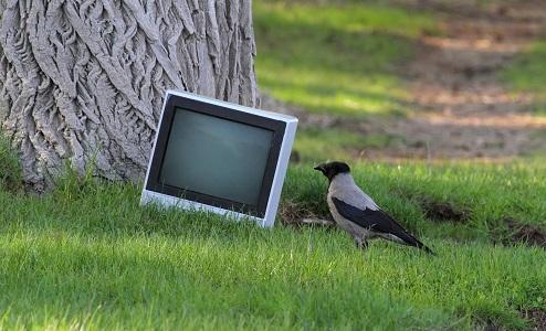 De kloge kragefugle