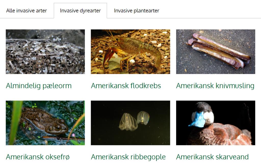 Overblik over invasive arter